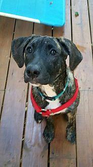 Hound (Unknown Type) Mix Dog for adoption in Germantown, Ohio - Jupiter