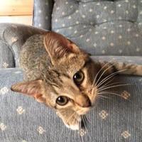 Adopt A Pet :: Connie - McDonough, GA