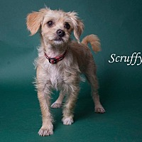Terrier (Unknown Type, Small) Mix Puppy for adoption in Riverside, California - Merlin