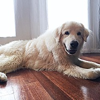 Adopt A Pet :: B.B. - Kyle, TX