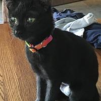 Adopt A Pet :: Pluto - Glendale, AZ