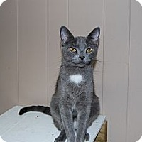 Adopt A Pet :: Tina Turner - Jackson, MS