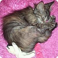 Adopt A Pet :: Benatar - Grand Rapids, MI