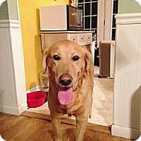 Adopt A Pet :: Disney - Lewisville, IN