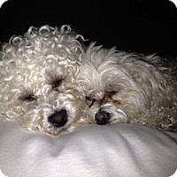 Adopt A Pet :: DANA - RENO, NV
