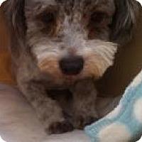 Adopt A Pet :: Wellington - NON SHED - Phoenix, AZ