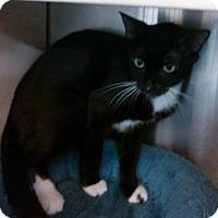 Adopt A Pet :: Mialeya - Lawrenceville, GA