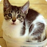 Adopt A Pet :: Sumi - Victor, NY