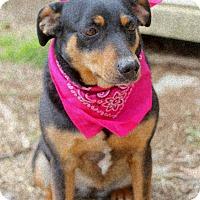 Adopt A Pet :: Gabi - Dalton, GA
