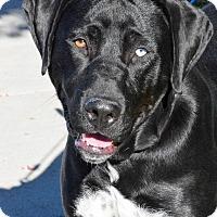 Adopt A Pet :: Amos - Meridian, ID