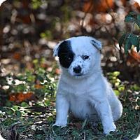 Adopt A Pet :: Fiona - South Dennis, MA