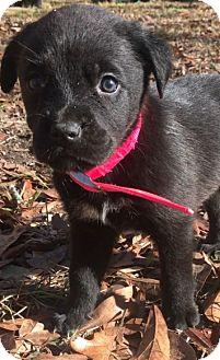 Mastiff/Anatolian Shepherd Mix Puppy for adoption in Sylacauga, Alabama - <3 Puppy 2 <3