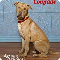 Adopt A Pet :: Comrade - Valparaiso, IN