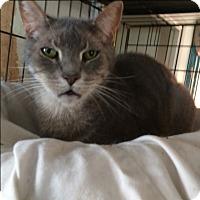 Adopt A Pet :: BooBoo - Cocoa, FL