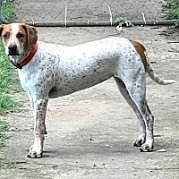 Adopt A Pet :: Zoey - Dallas, TX
