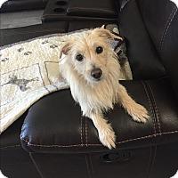 Adopt A Pet :: Candy - Brea, CA