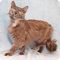Adopt A Pet :: Starlet - Encinitas, CA