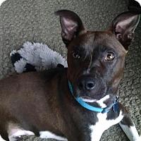 Adopt A Pet :: Diamond - Doylestown, PA