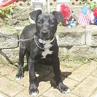 Adopt A Pet :: Fidelity - West Chicago, IL