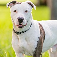 Adopt A Pet :: Maxwell * - Miami, FL