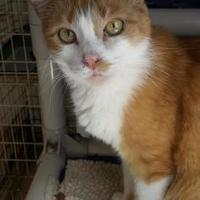 Adopt A Pet :: Nevish - Shelbyville, KY