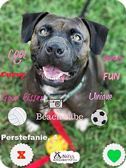 Terrier (Unknown Type, Medium) Mix Dog for adoption in Bradenton, Florida - Perstefanie