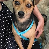 Adopt A Pet :: Bronx - Thousand Oaks, CA