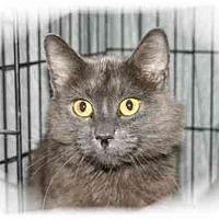 Adopt A Pet :: Elmer - Montgomery, IL