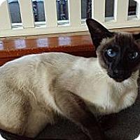 Adopt A Pet :: Sammy (JT) - Little Falls, NJ