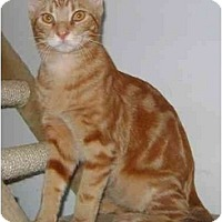Adopt A Pet :: Marbles - Etobicoke, ON