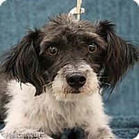 Adopt A Pet :: Barney - Broomfield, CO