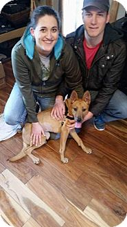Corgi/German Shepherd Dog Mix Dog for adoption in Northville, Michigan - Melba-ADOPTED