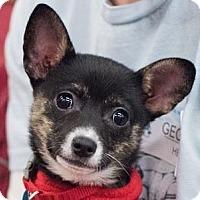 Adopt A Pet :: Georgia - Minneapolis, MN