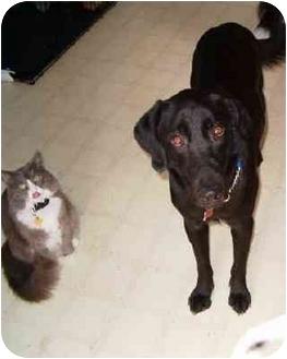 Labrador Retriever Mix Dog for adoption in Scottsdale, Arizona - Boo Boo