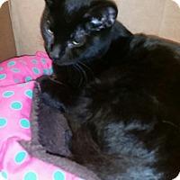 Adopt A Pet :: KJ (king) - Rockford, IL