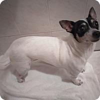 Adopt A Pet :: Ellie - Fort Lauderdale, FL
