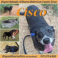 Adopt A Pet :: Cisco - Hearne, TX