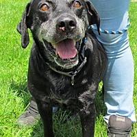 Adopt A Pet :: Lucy - Batavia, OH