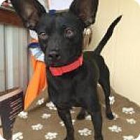 Adopt A Pet :: DRIVER - Elk Grove, CA