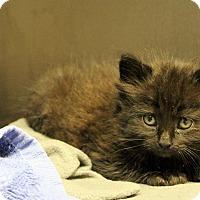 Adopt A Pet :: elliott - Muskegon, MI