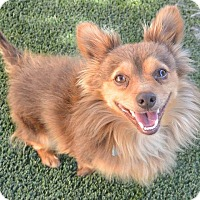 Adopt A Pet :: Speedy - Meridian, ID