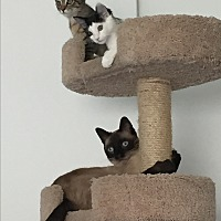 Adopt A Pet :: LILY and LUNA - Brea, CA