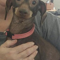 Adopt A Pet :: Lucy - Pearland, TX