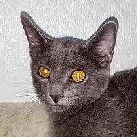 Adopt A Pet :: Mojito - Berlin, MD