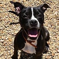 Adopt A Pet :: Tee - Lacon, IL