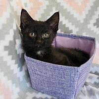 Adopt A Pet :: Charlie V - Muskegon, MI