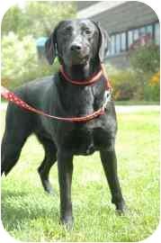 Labrador Retriever Mix Dog for adoption in Walker, Michigan - Dutchess