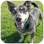 Photo 1 - Australian Cattle Dog Mix Dog for adoption in San Clemente, California - LILLY