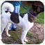 Photo 1 - Akita Dog for adoption in Long Beach, New York - Jetta