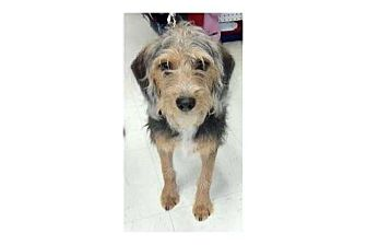 Terrier (Unknown Type, Small) Mix Dog for adoption in Pompton Lakes, New Jersey - Benji